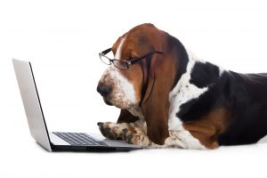 basset hound dog working on a computer